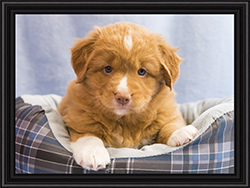 NSDTR Toller Puppy Pink week 6