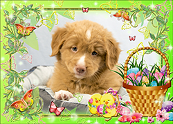 NSDTR Toller Puppy Pink week 7