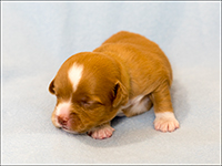 NSDTR Toller Puppy Mint wk2